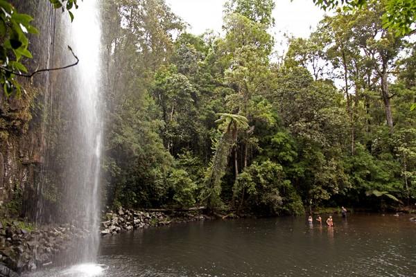 Atherton Tablelands: Millaa Millaa Falls