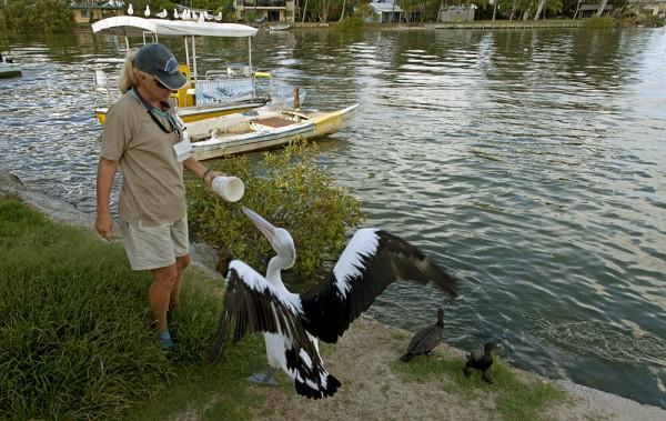 Kein Frühstücksfisch für den Pelikan (2)