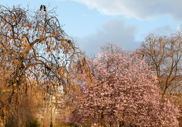 Marsfeld Paris: Zwei Raben mit Frühlingsgefühlen
